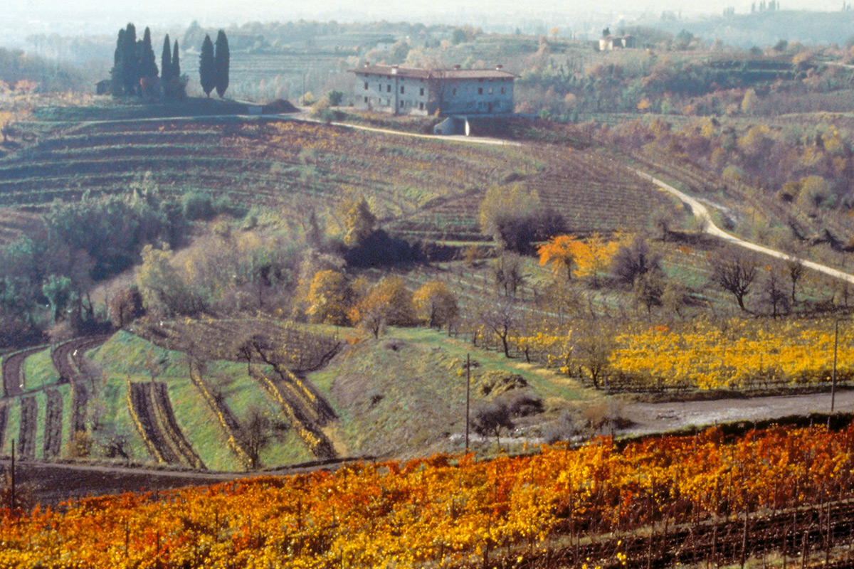 collio-what-do-and-see
